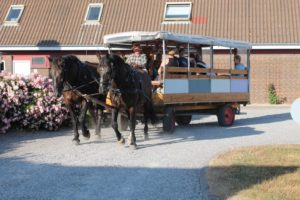 Horse carriage ride @ Fornæs